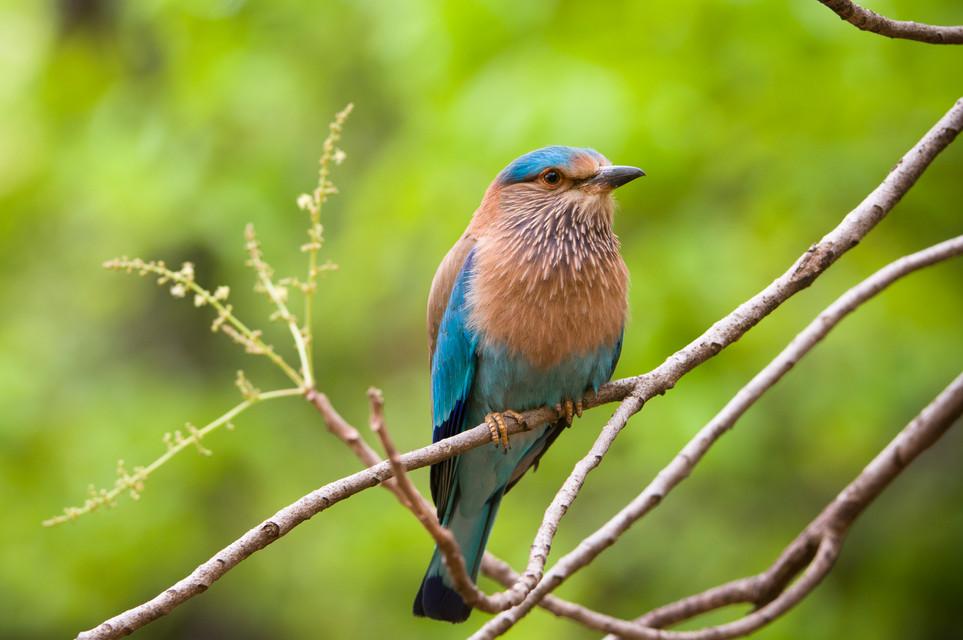 BIRDS - 06.jpg