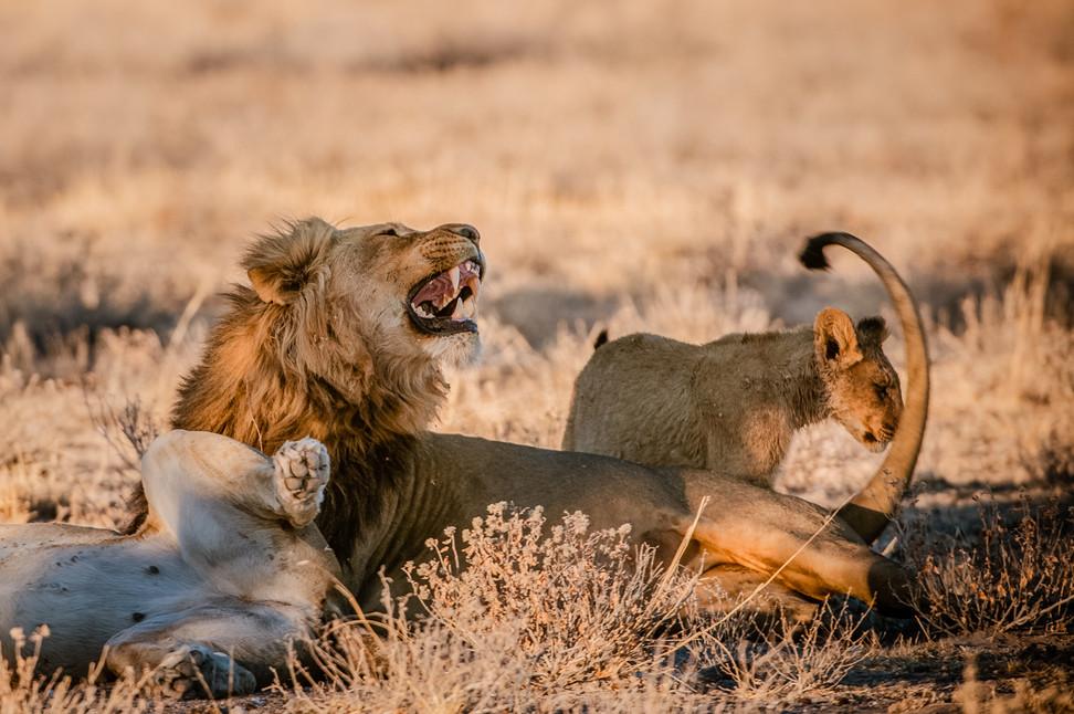 LIONS - 69.jpg