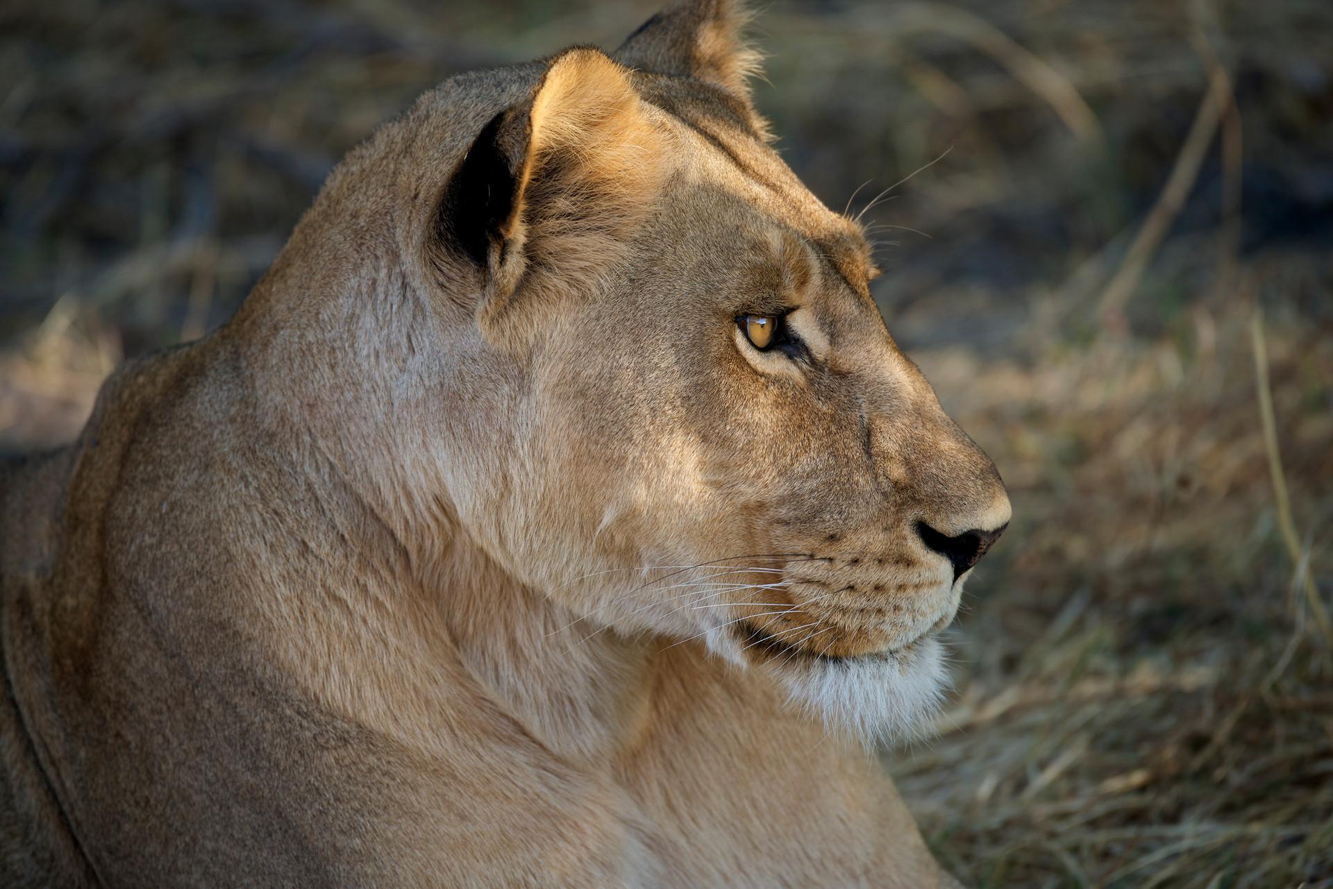 LIONS - 41.jpg