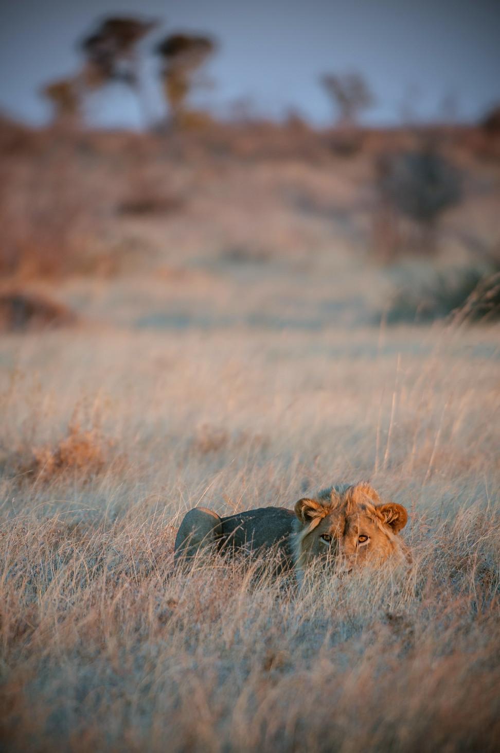 LIONS - 70.jpg