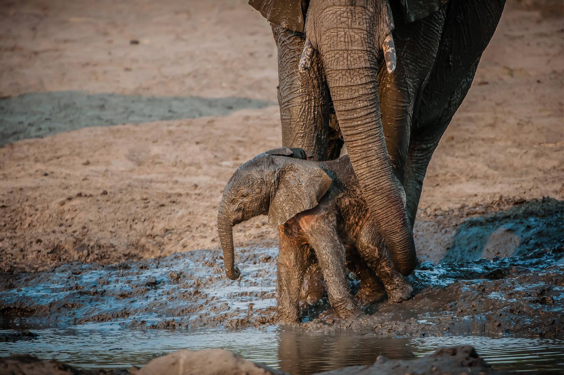 ELEPPHANTS - 15.jpg