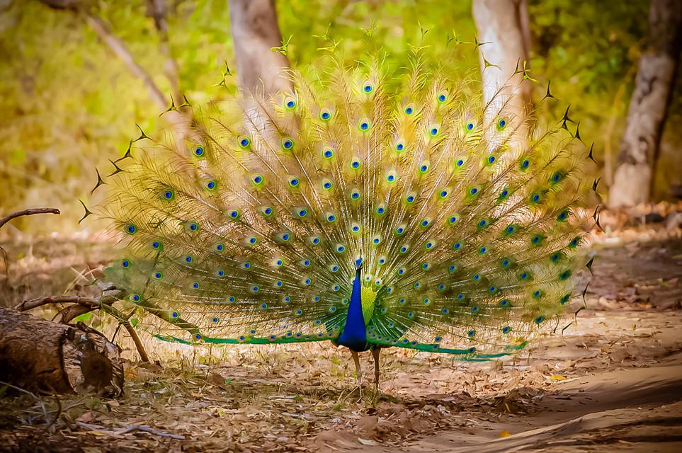 BIRDS - 20.jpg