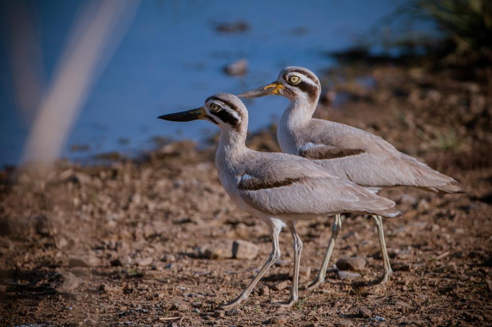 BIRDS - 12.jpg