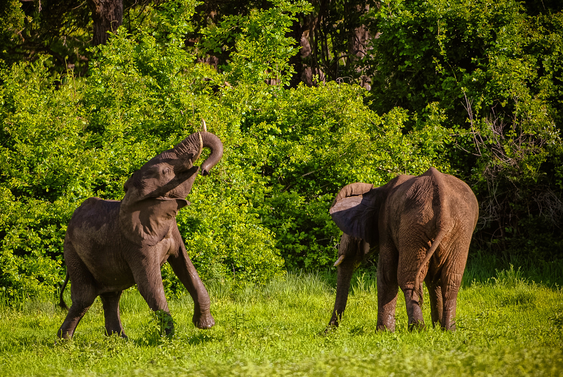 ELEPPHANTS - 28.jpg