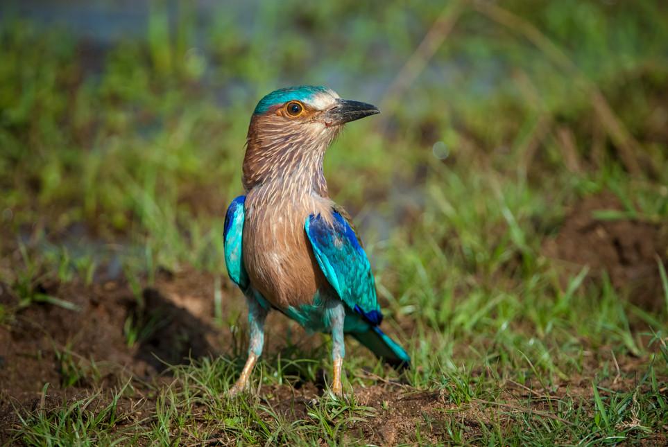 BIRDS - 07.jpg