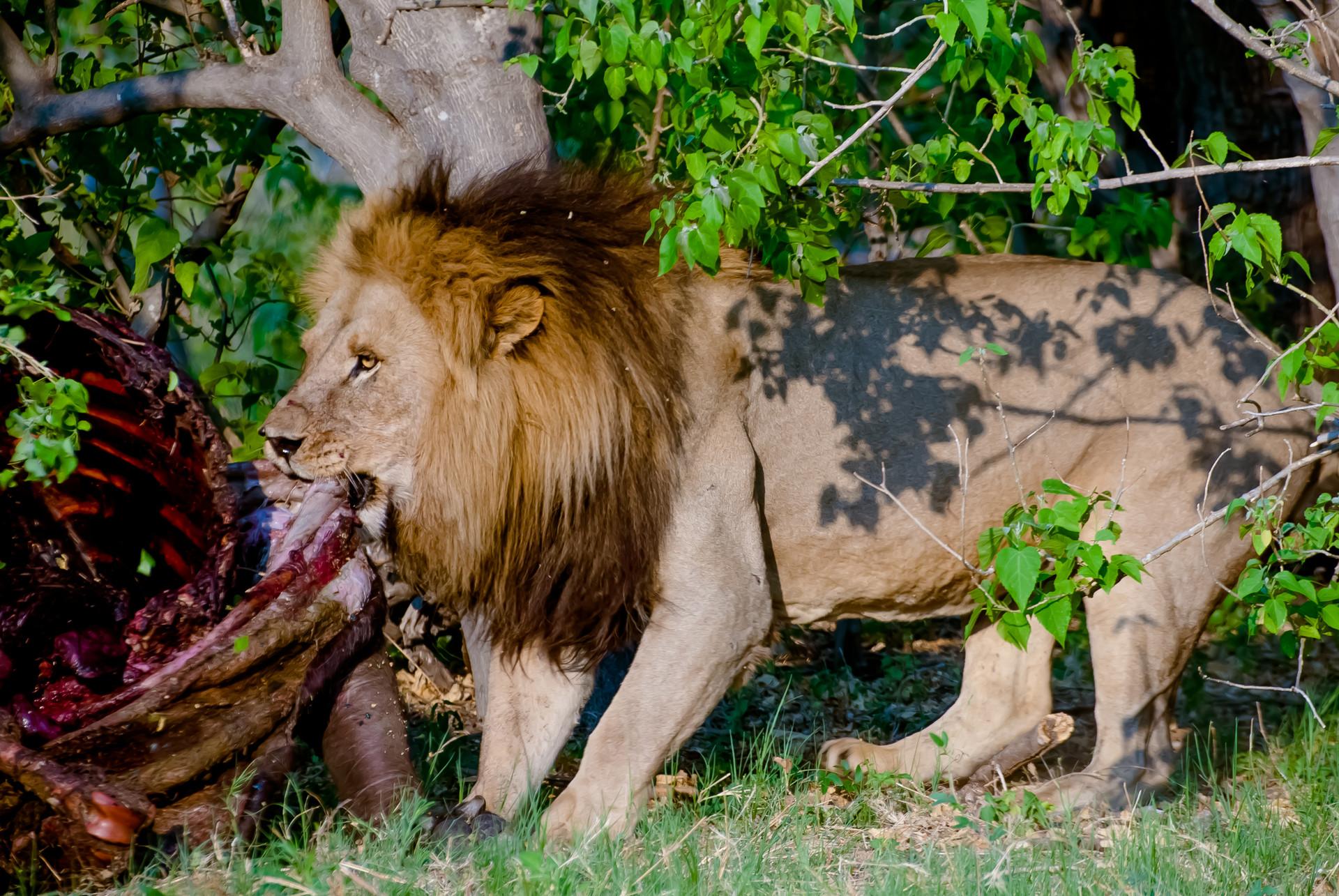 LIONS - 58.jpg