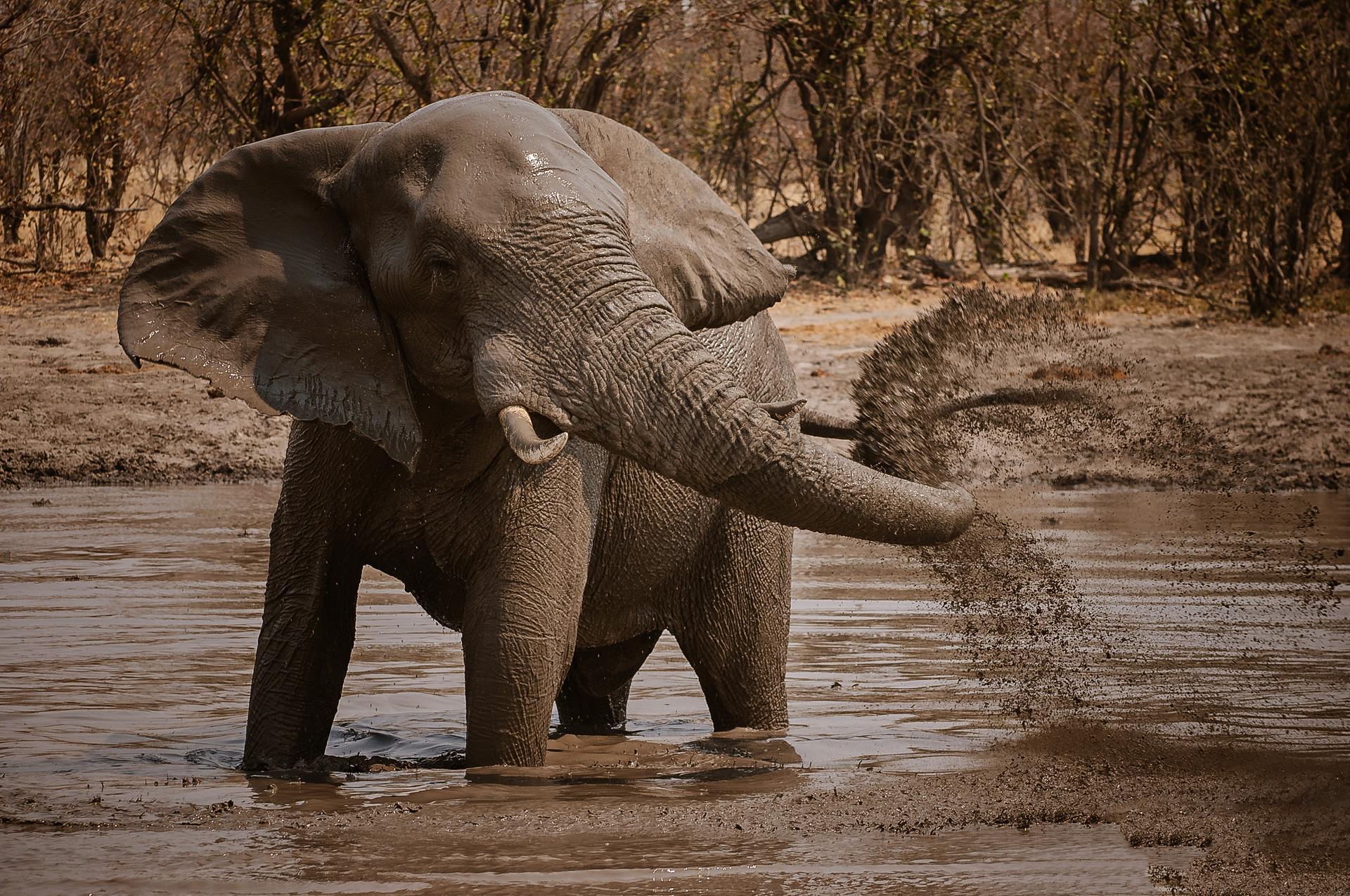 ELEPPHANTS - 08.jpg