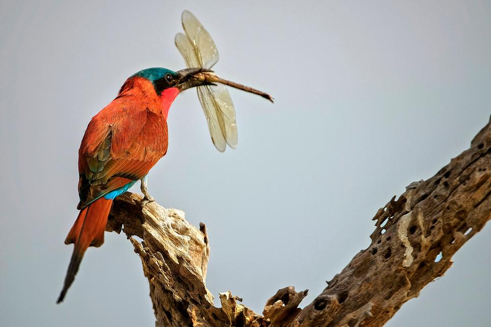 BIRDS - 05.jpg