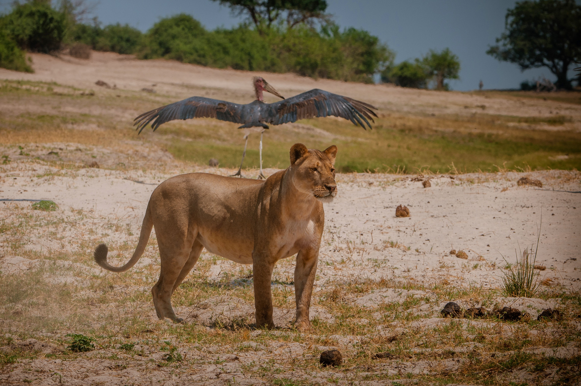 LIONS - 40.jpg