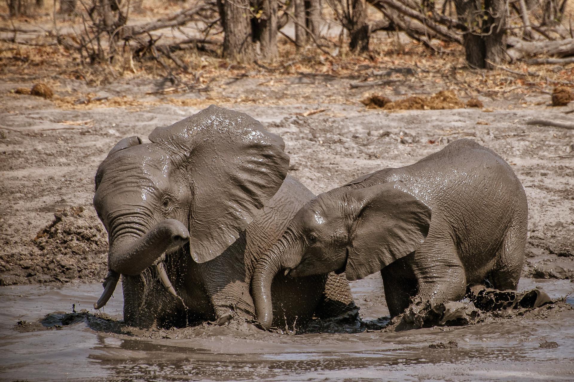 ELEPPHANTS - 31.jpg