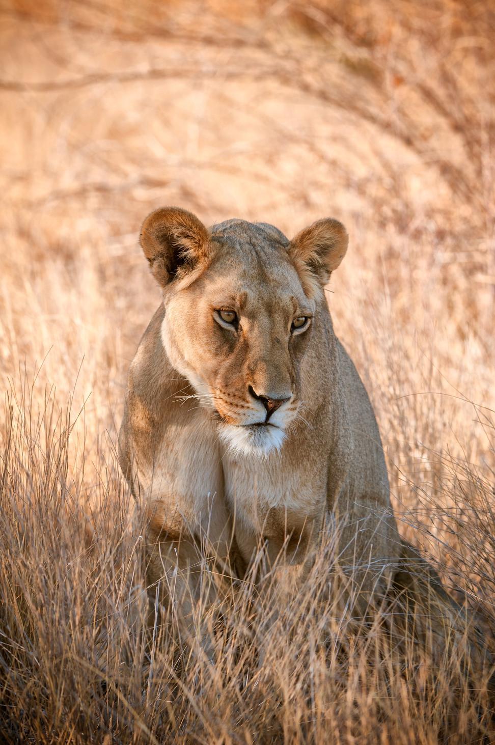 LIONS - 37.jpg
