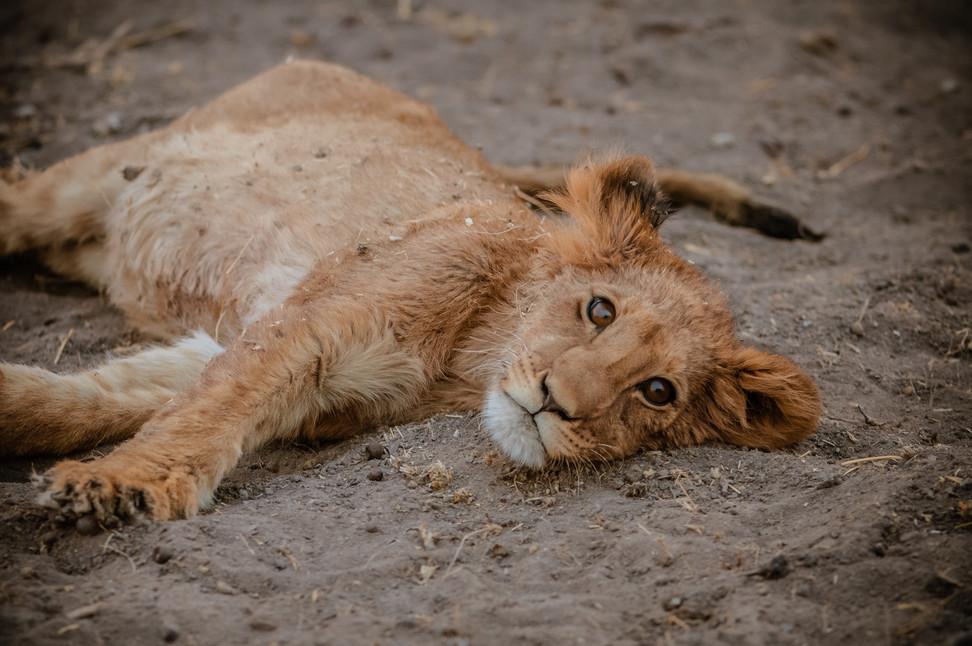 LIONS - 79.jpg