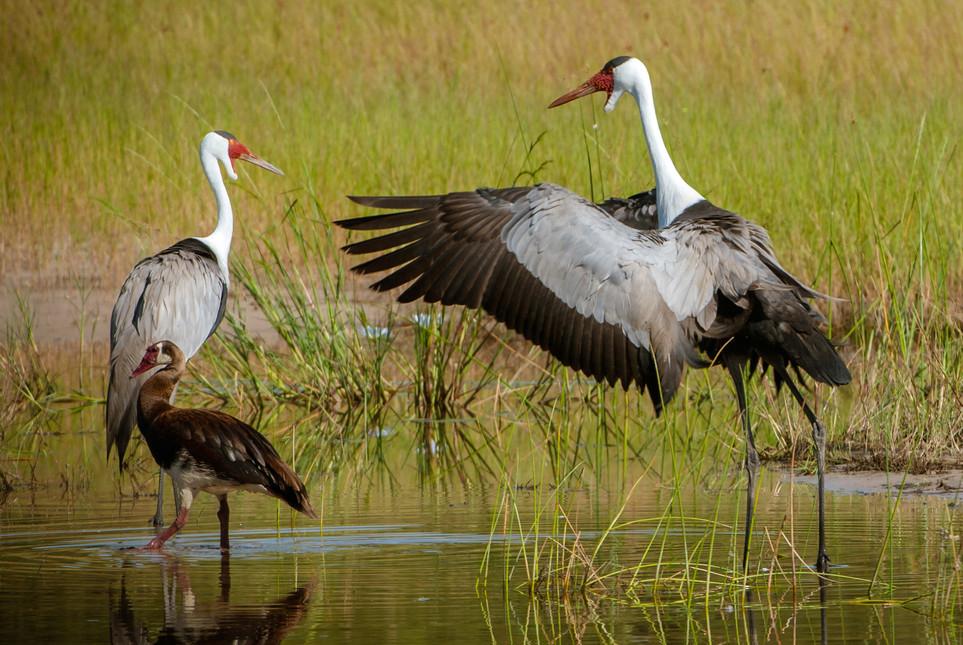 BIRDS - 13.jpg