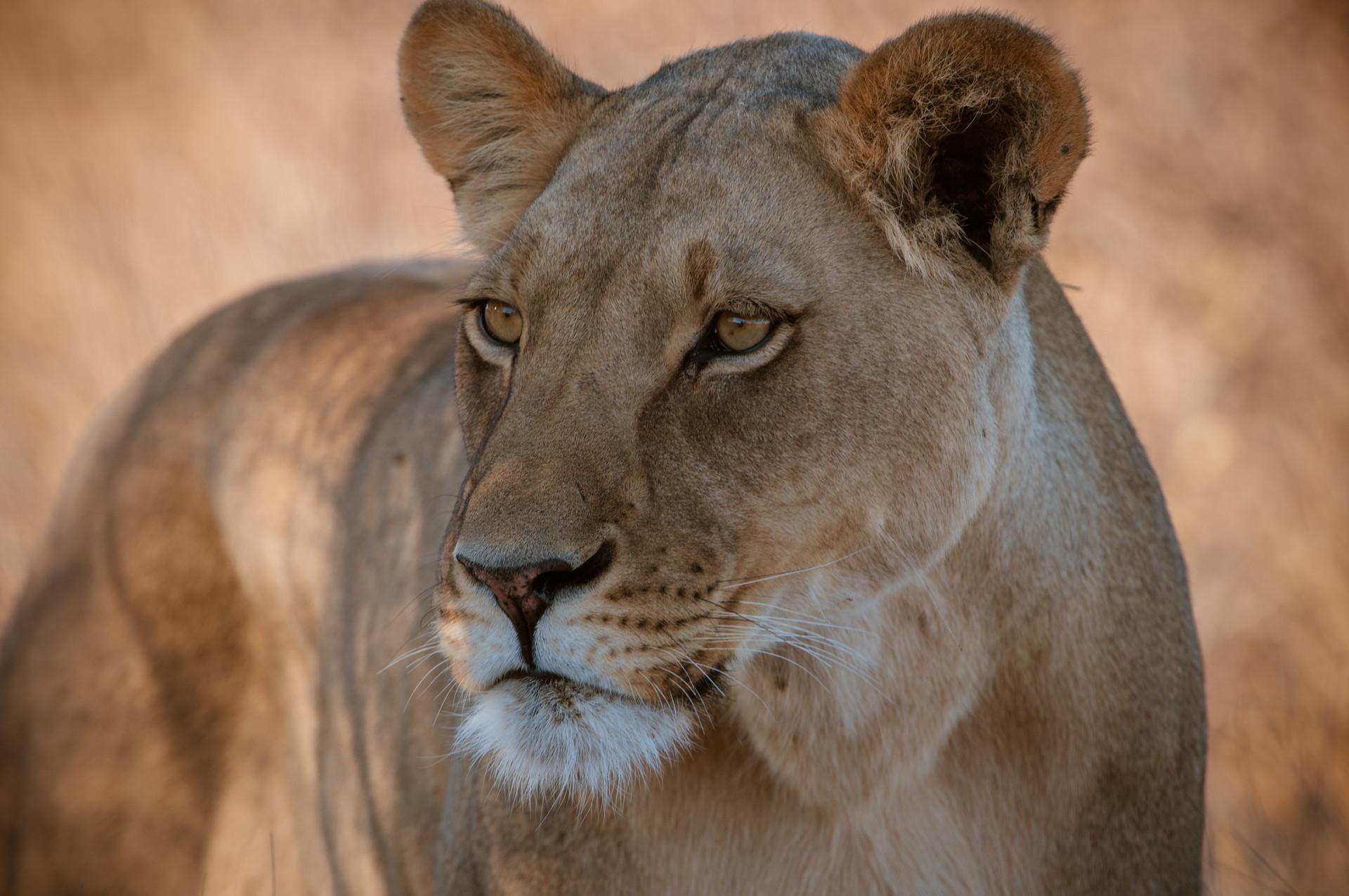 LIONS - 32.jpg