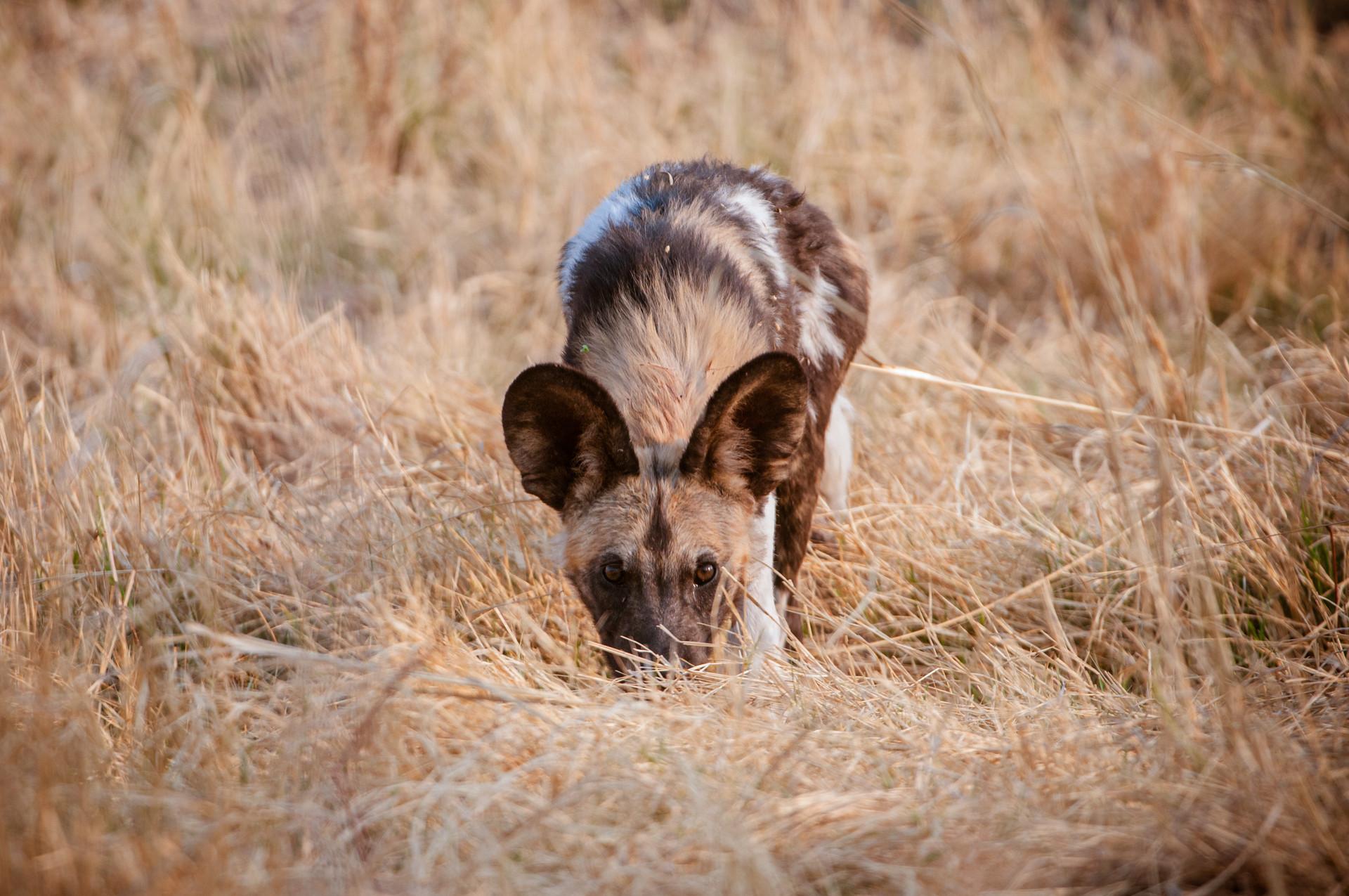 WILD DOGS - 04.jpg