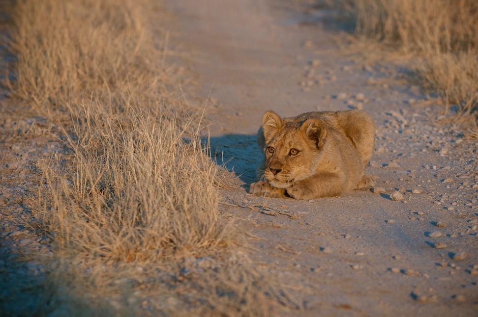 LIONS - 64.jpg