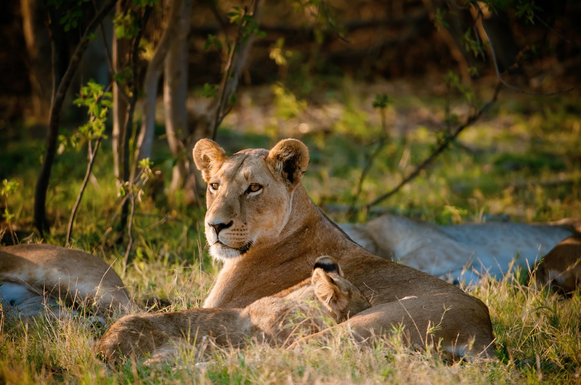 LIONS - 33.jpg
