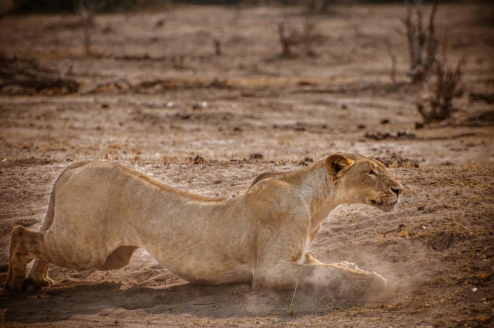 LIONS - 61.jpg