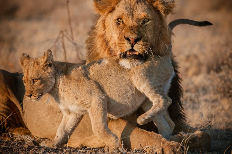 LIONS - 59.jpg