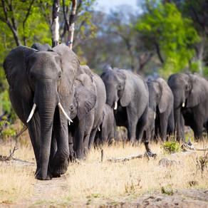 Zimbabwe bans coal mining in Hwange National  Park
