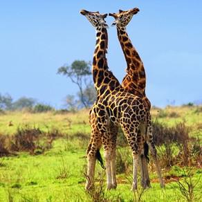 Uganda set to launch virtual safari to get tourism sector back on track