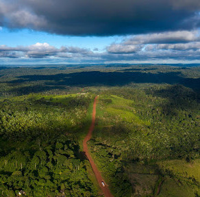 New UK laws to be enforced to stop deforestation in supply chains