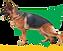 Green-Colour-Logo-transparent-header-2.png