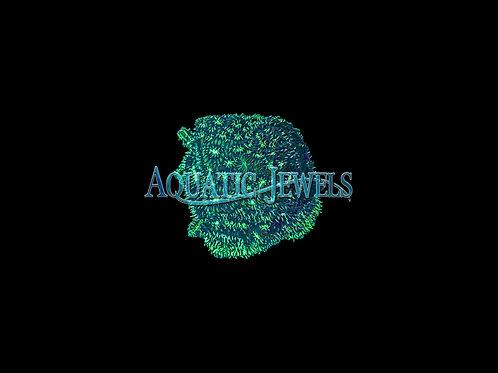 Green Lepto (Leptoseris)