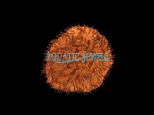 Orange Fungia (Fungia Plate)