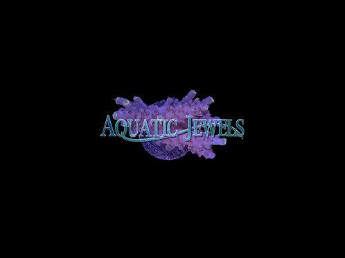 Purple Acro (Acropora)
