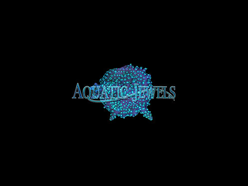 Spotted Acro (Acropora)