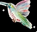 Hummingbird copy.png