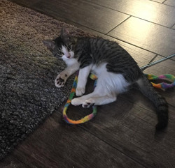gumbo at home adopt