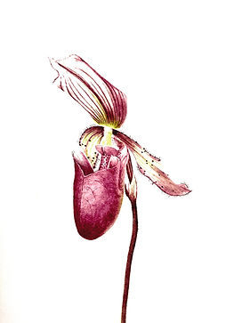 orchidhead.jpg