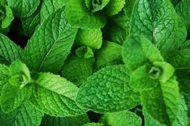 Scent Leaf / Efirin