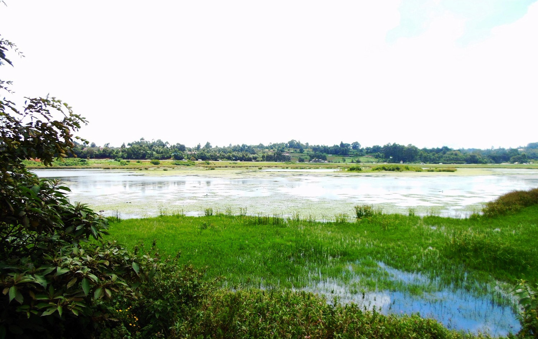 Water body in Limuru