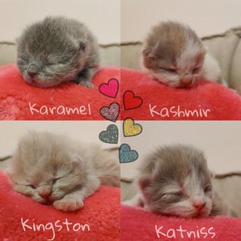 kittens website bbbbb.jpg
