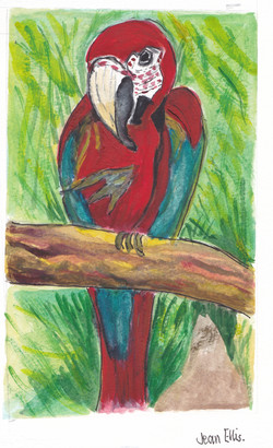 Jean E parrot