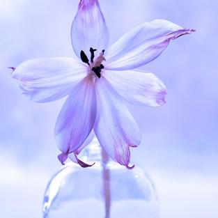 Flower - 9 Dec