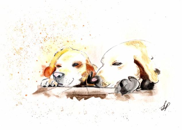 Lesley Sleeping Dogs.jpg