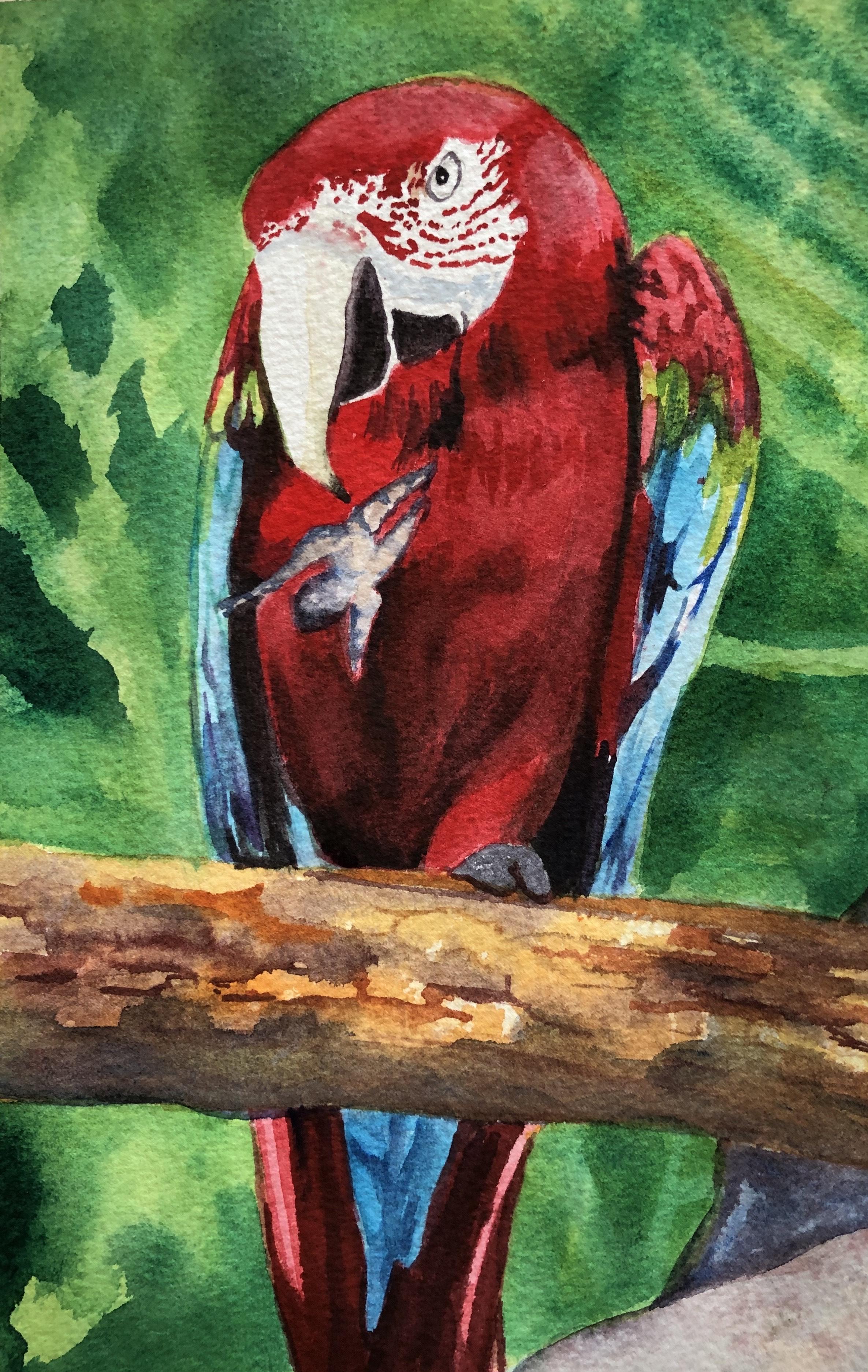 Lyn g parrot