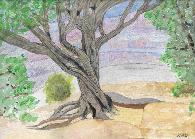 David Grand Canyon Tree.png