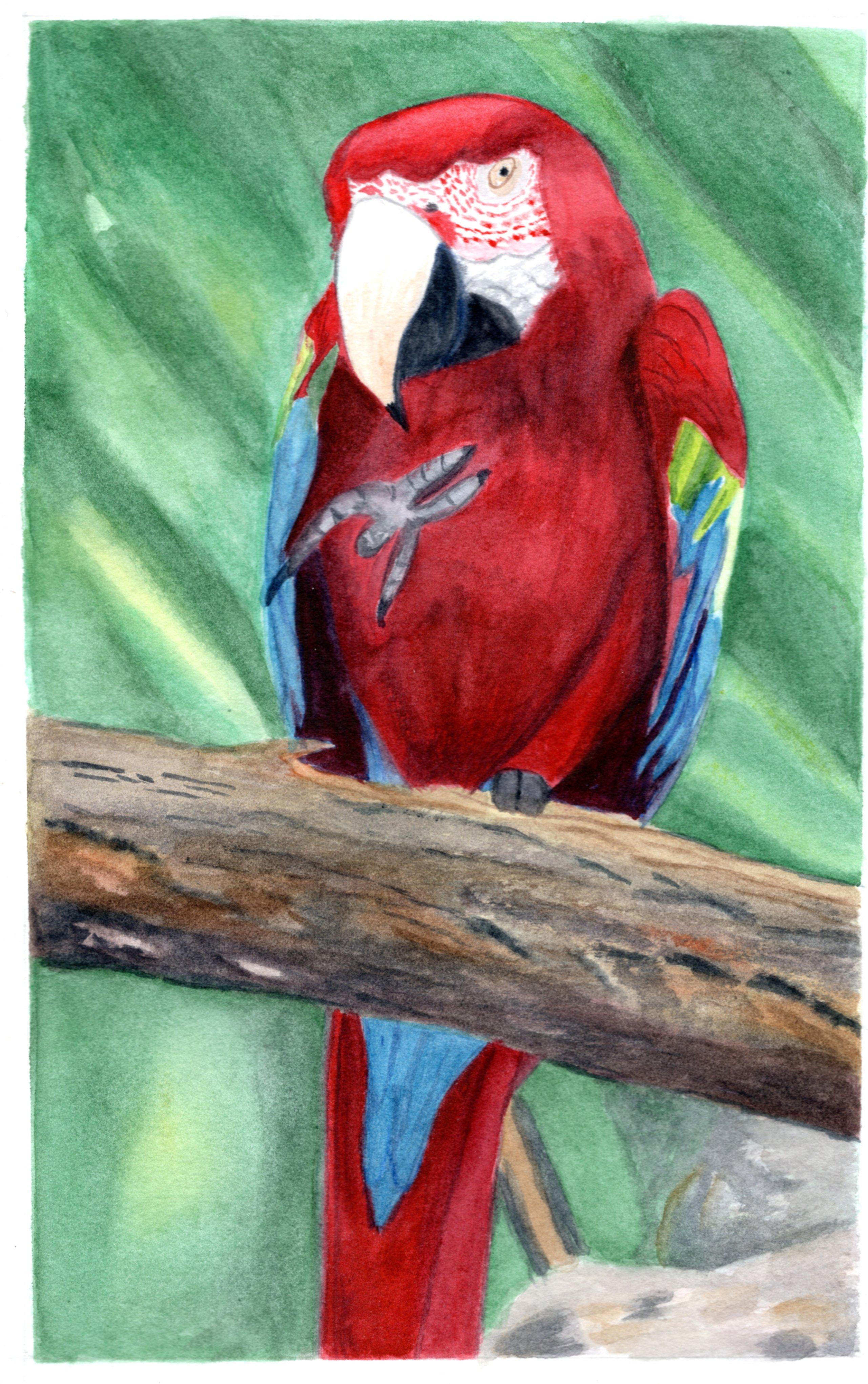 lesley parrot2