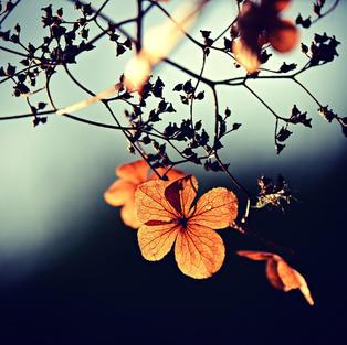 flowers-3876195_1920.jpg