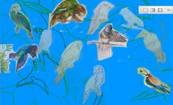 1st draft: birds with blue