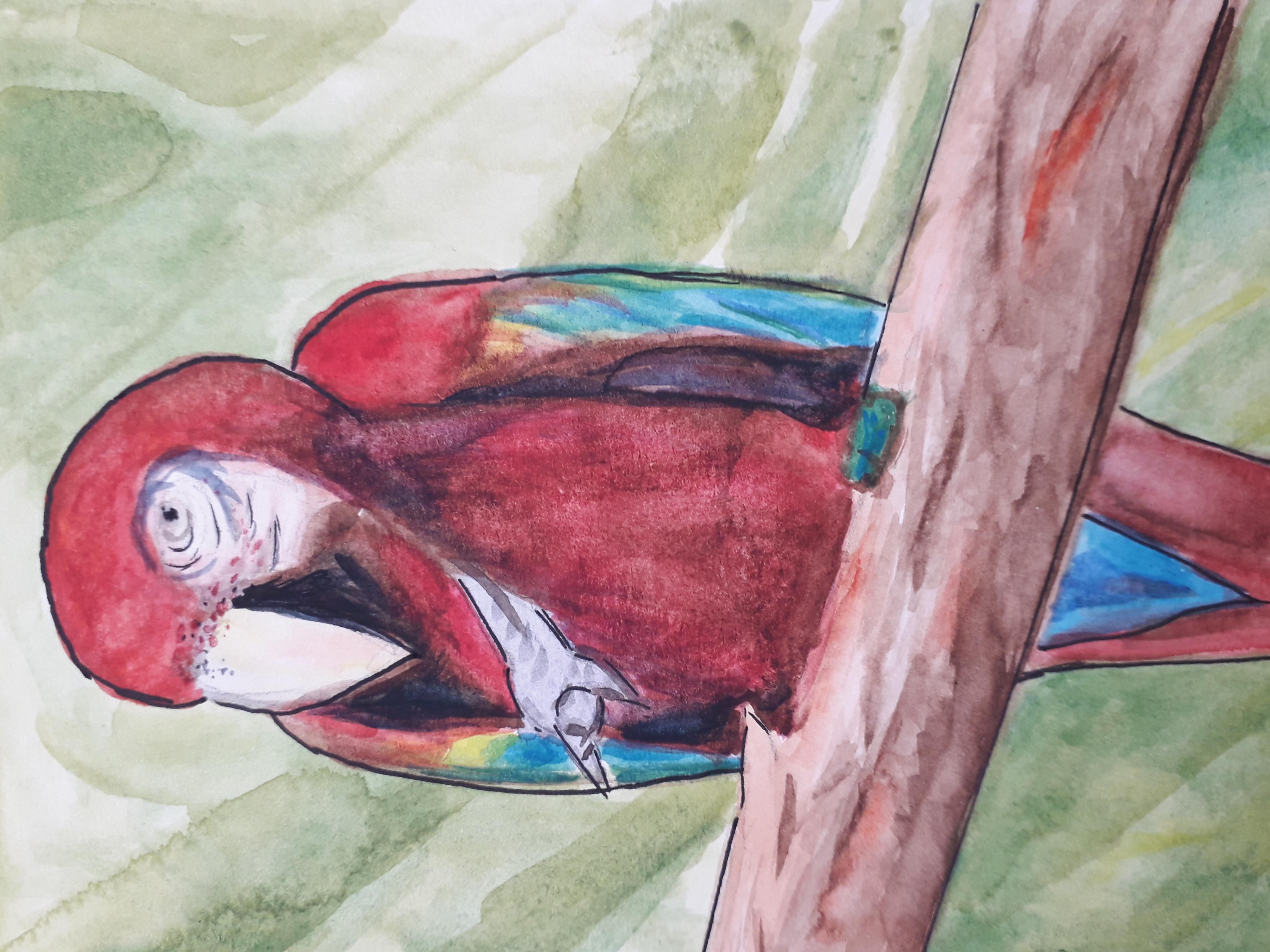 jenny parrot