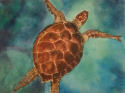 Jill Turtle