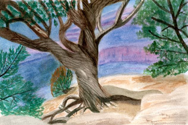 Lesley Grand Canyon Tree.jpg