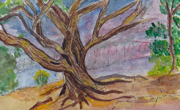 Jean Grand Canyon Tree.jpg