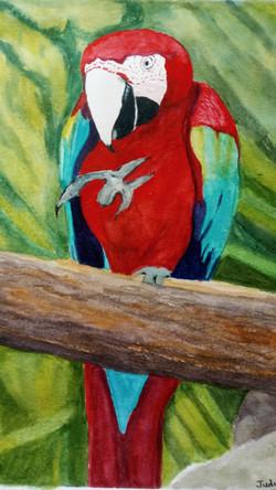 judy parrot